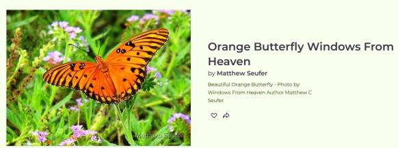 Screenshot_2020-07-02 Orange Butterfly Windows From Heaven by Matthew Seufer